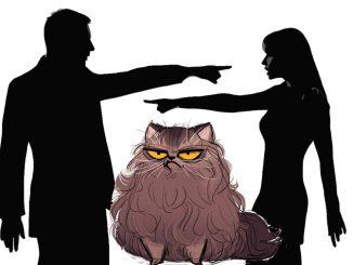 Самые абсурдные причины для развода из практики юристов