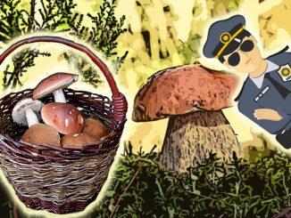 Закон о сборе грибов и ягод 2019: нужно ли платить налоги