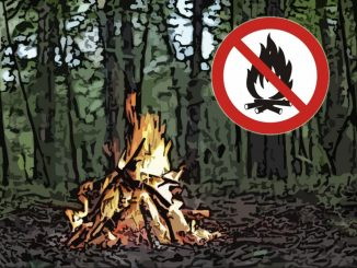 Штрафы за костры в лесу до 500 тысяч рублей