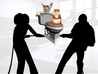 Супруги делили хомячков, кота и высокотехнологичный унитаз при разводе…